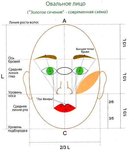 пропорциям лица видно, что